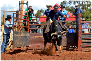 Events That Could Be Improved With A Rodeo Bull