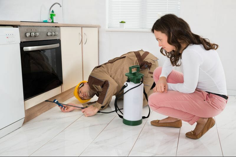 How To Pest Proof Your Home For Autumn