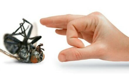Pest Control Tips For The Home