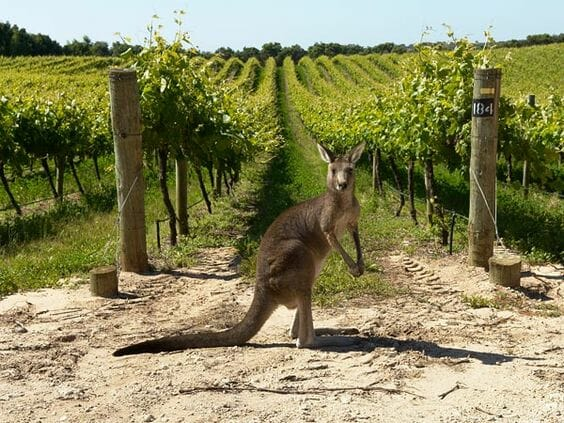 The Ultimate Australian Wine Tour