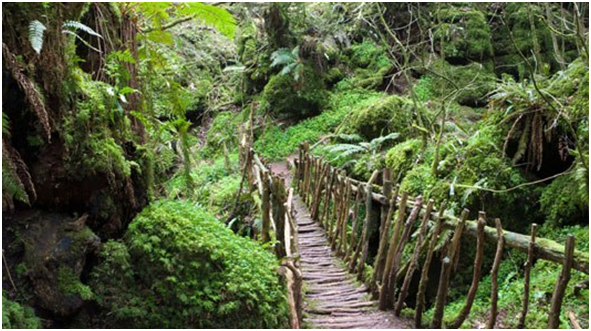 Take A Trip To Puzzlewood